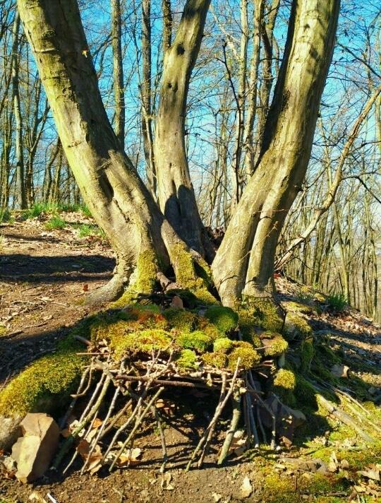 domeček pro víly les