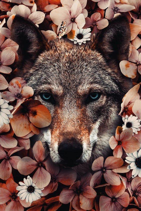 silové zvíře  vlk  duchovní spojenec duchovní průvodce