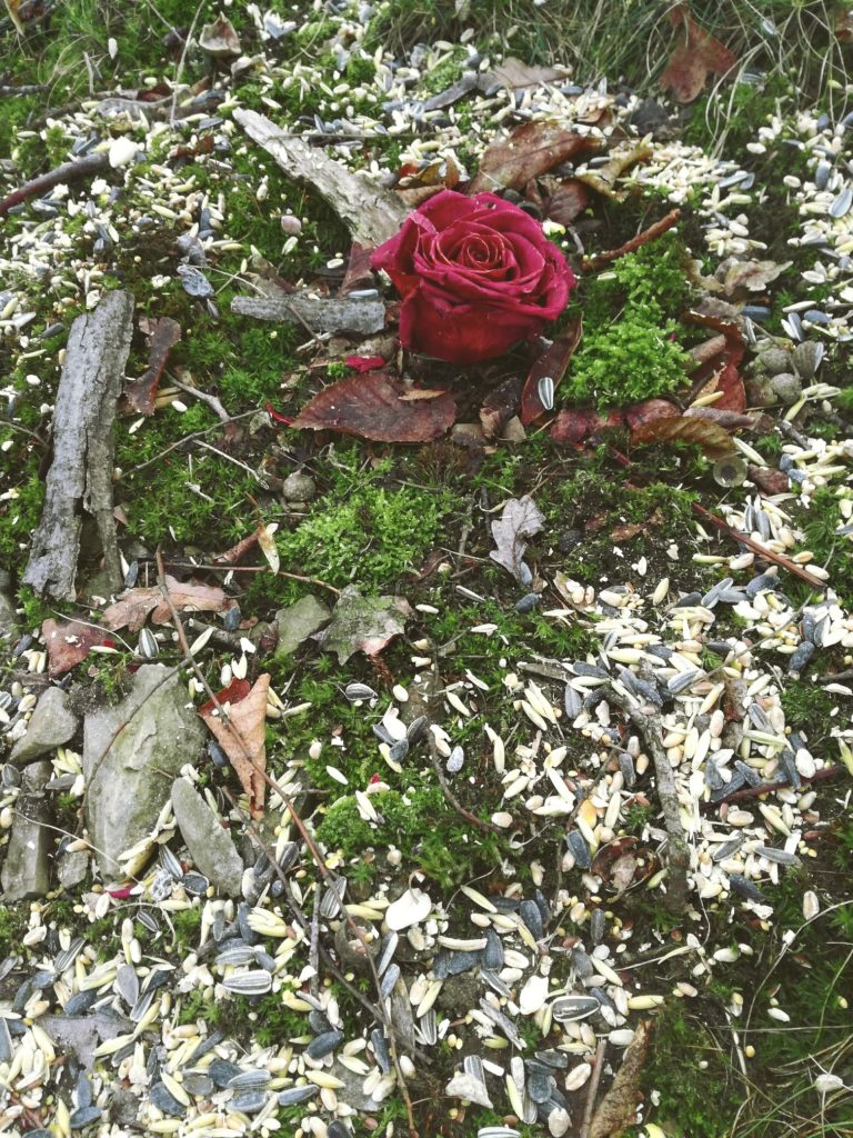 rituál  růže